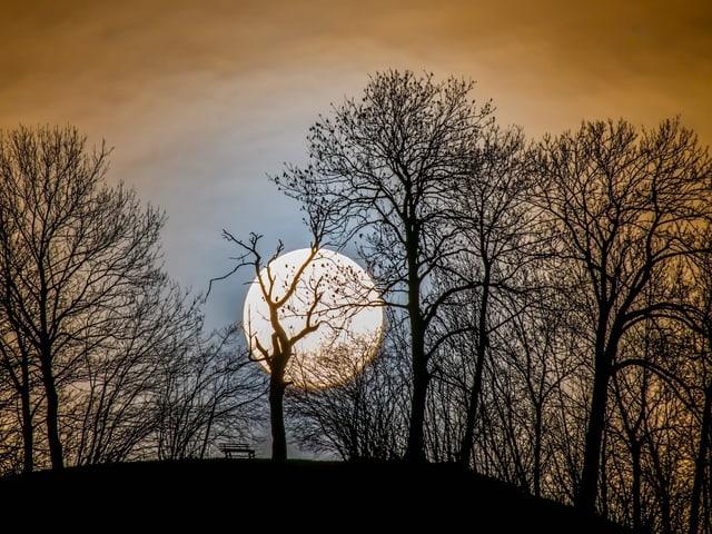 Vollmond hinter Bäumen