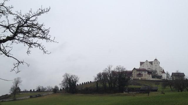 Totalansicht von Schloss Wildegg.