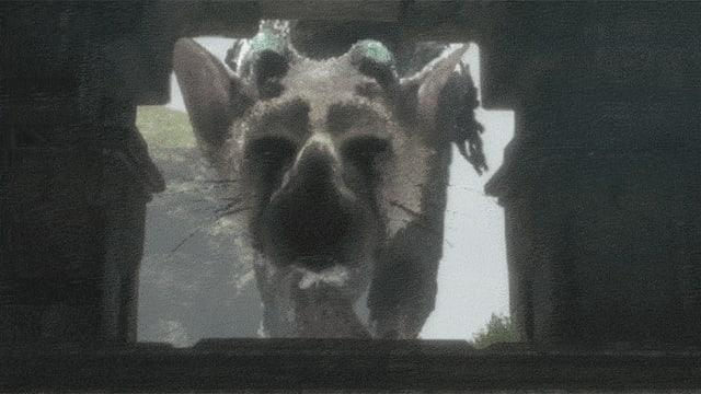 Trico: ein vogelartiges Mischwesen, das aussieht wie eine gefiederte Katze und sich bewegt wie ein Hund.