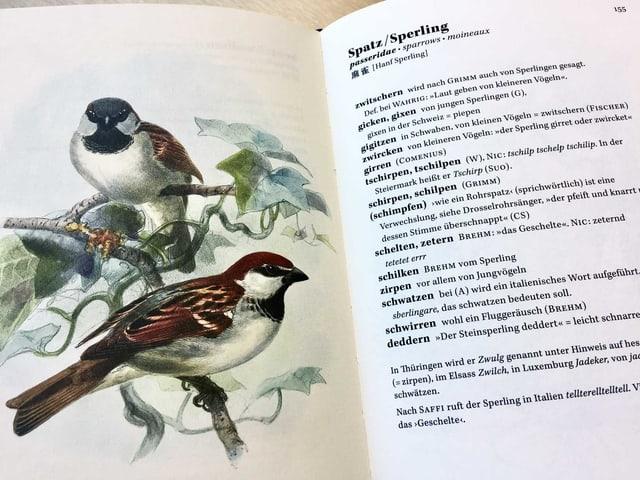 Ein aufgeschlagenes Buch. Links ist eine Illustration eines Vogels, rechts ein Text.