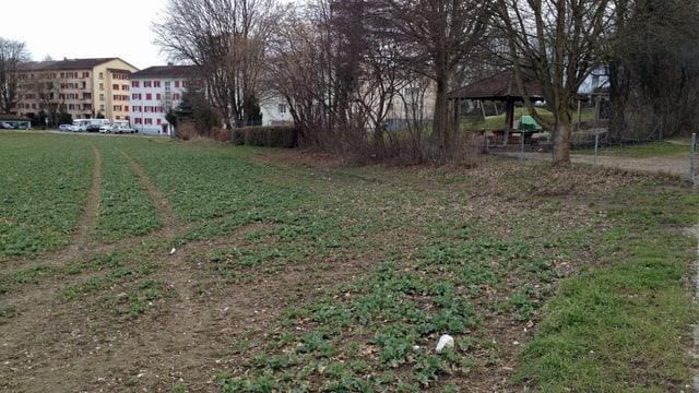 Ein bepflanzter Acker, dahinter Wohnblöcke und eine kleine Parkanlage.