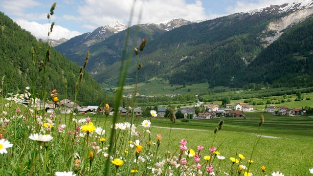 Blumenwiese im Val Müstair.
