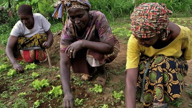 Drei Frauen aus Tansania arbeiten auf einem Feld.