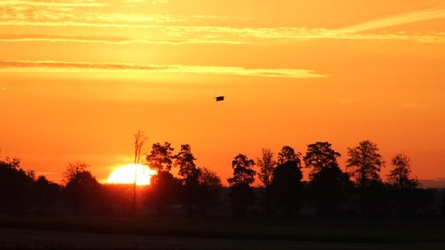 Sonne geht hinter Bäumen am Horizont auf