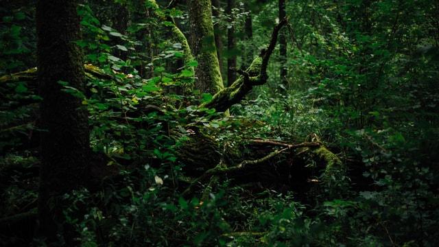 Blick in den Wald.