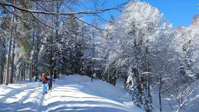 Der Winter gibt sich noch nicht geschlagen. Winterliche Schwägalp am 26. Februar.