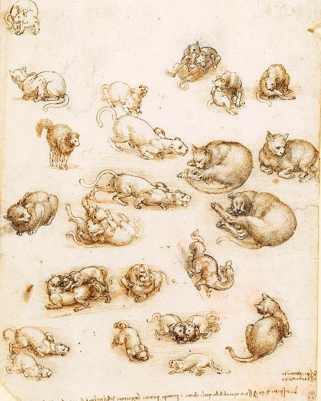 Da Vinci Skizzen: Katzen
