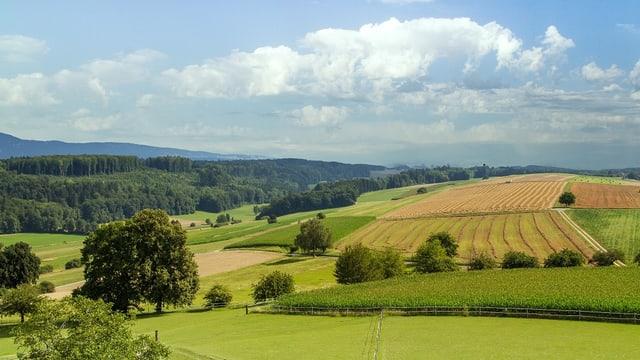 Eine Hügellandschaft mit grünen Wiesen, gelben Kornfeldern und blauem Himmel.