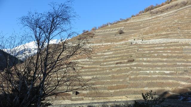 Die Trockensteinmauern stehen im höchsten Weinberg Europas.