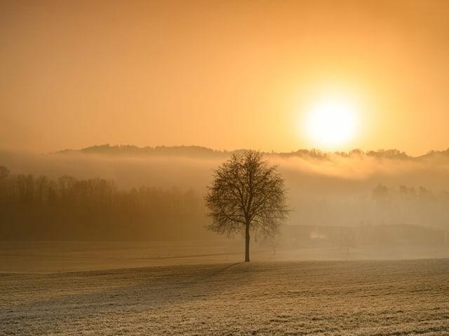 Sonne zeigt sich in gelblichem Licht hinter dem Nebeldunst