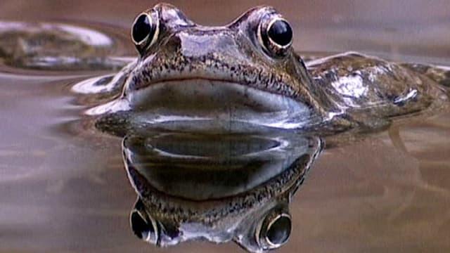 Video «Sei ein Frosch - im Nationalpark! (Schweizerdeutsch)» abspielen