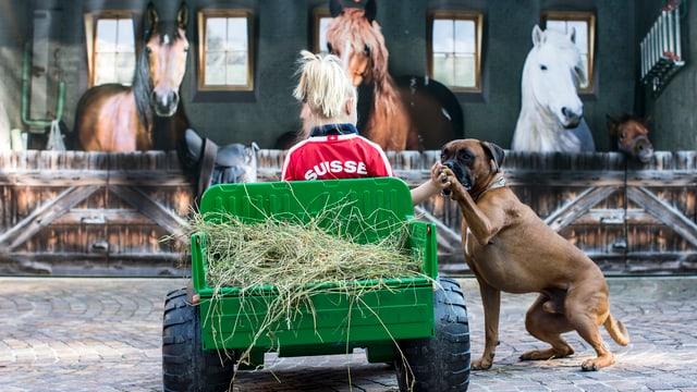 Mädchen gibt Hund die Hand, steht vor drei Pferden in einem Plastiktraktor sitzend