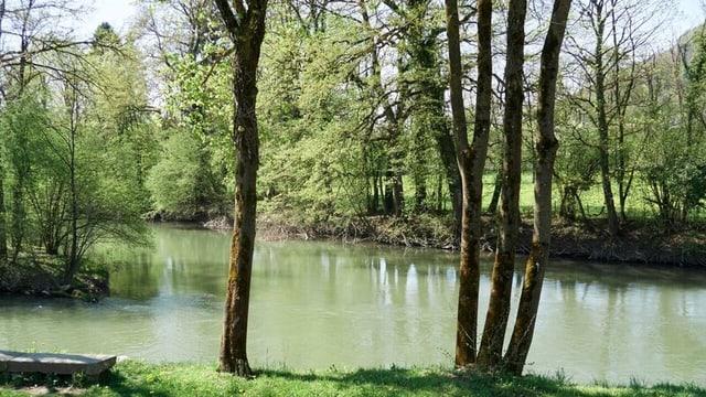 Ein Fluss mit grünem Ufer und viel Wald