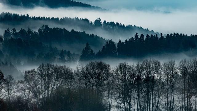 Winterlicher Wald mit Nebelschwaden