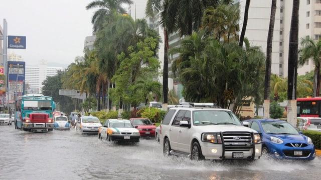 Autos auf einer überschwemmten Hauptstrasse in Acapulco, am rechten Strassenrand windgepeitschte Bäume