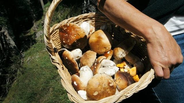 Eine Frau hat einen Korb voll mit Steinpilzen und Eierschwämmen in der Hand.