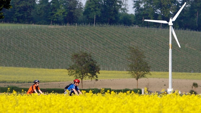 Radfahrer nahe einem Rapsfeld
