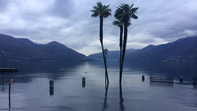 Überflutete Uferpromenade in Ascona. Die Palmen stehen im Wasser.