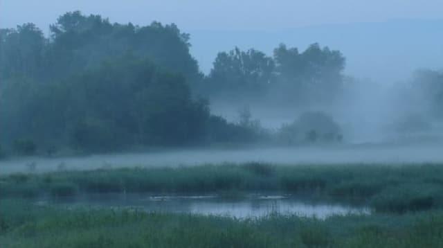 Video «Natur am Rhein: Flussgeister (1/3)» abspielen