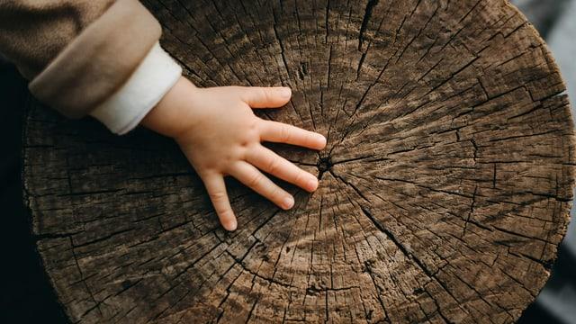Eine Kinderhand fasst einen Baumstamm mit Lebensringen an.