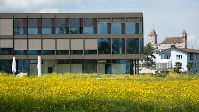 Modernes Gebäude einer Schule - im Vordergrund eine Blumenwiese.