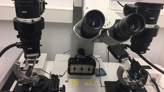 Im Labor, Mikroskop