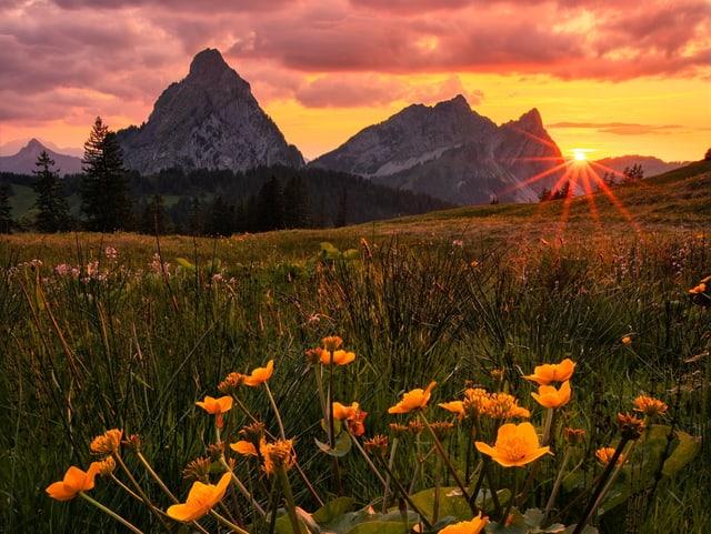 Bewölkter Himmel in gelben Tönen, davor zwei Gipfel und Blumenwiese im Vordergrund.