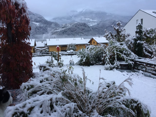 Schnee in einem Garten.
