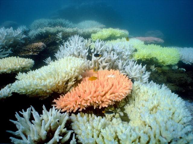 Verschiedene Korallenarten wiegen sich mit den Meeresbewegungen.