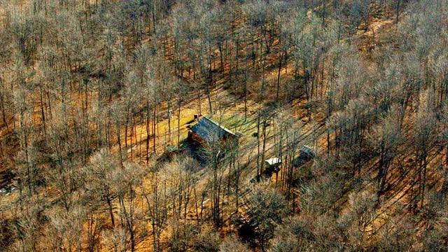 Eine Hütte inmitten eines Waldes.
