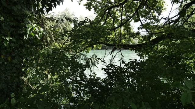 Fluss durch Bäume hindurch gesehen