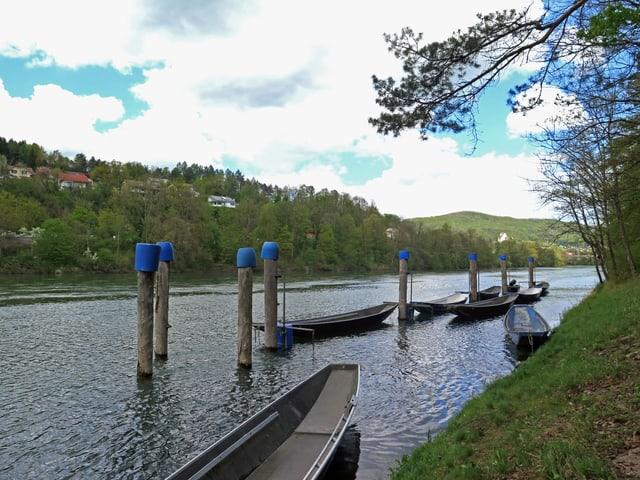 Die Aare mit den Booten des Wasserfahrvereins Rupperswil.