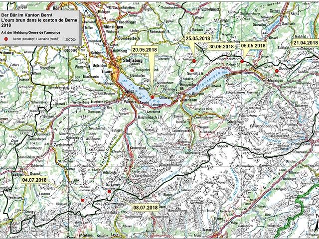 L'urs a Berna.