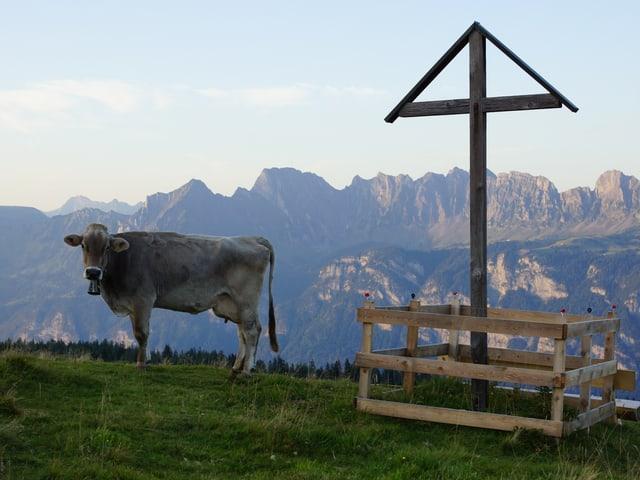 Eine Kuh neben einem Holzkreuz auf einer Alp.