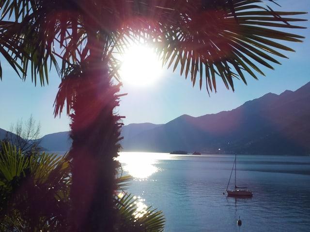 Gegenlichtfoto auf den See hinaus mit Palme.