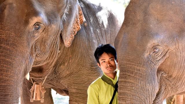 Ein Mann steht zwischen zwei Elefanten und schaut in die Kamera.