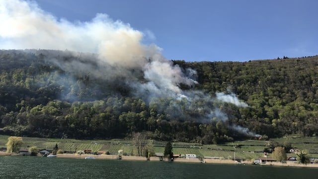 Rauch über Wald am Bielersee