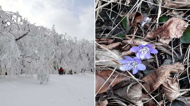 Kälte und Schnee im vergangenen Jahr, erste Blüten in diesem Jahr.