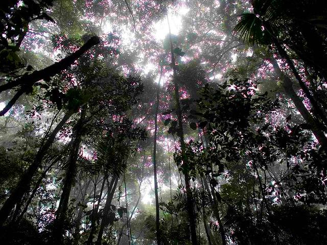 Urwald in Südamerika