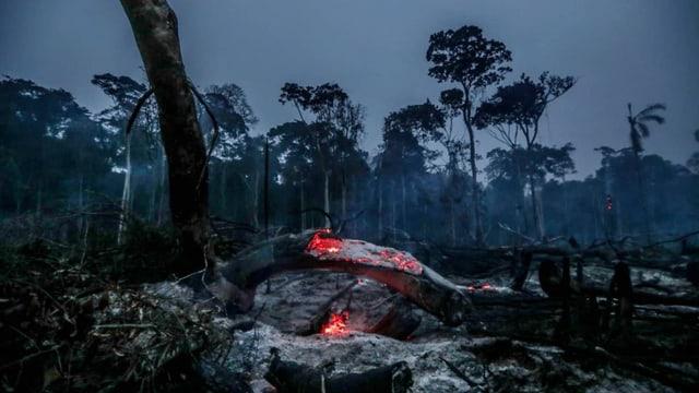 Glühender Baumstamm im Regenwald