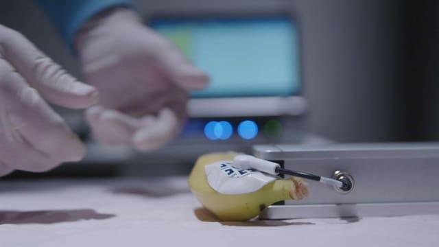 Der Bananen-Test