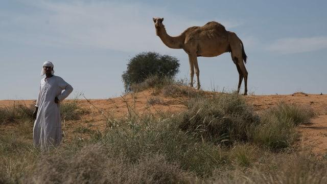 Hirte mit Kamel steht in der Wüste