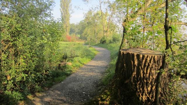 Bild vom Uferweg, rechts am Bildrand steht der Strunk eines abgesägten Baumes.