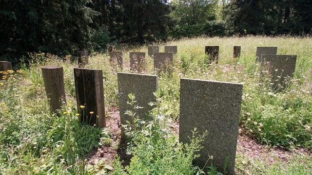 Eine Grabreihe mit viel Gras im Zürcher Friedhof Nordheim
