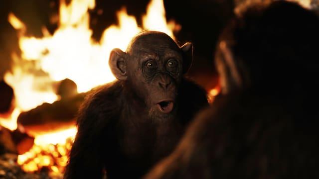 Affe vor dem Feuer