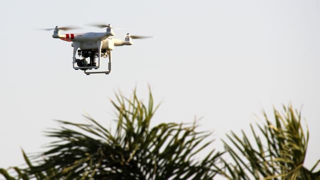 Eine Drohne fliegt über eine Palme.