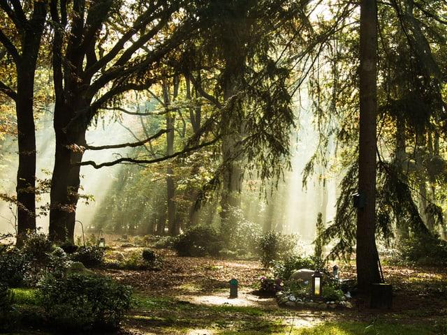 Die Sonne scheint in einen Friedwald, in dem Ruhestätten dezent markiert sind.