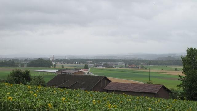Im Vordergrund zeigt das Bild ein Sonnenblumenfeld, dahinter ist ein Bauernhof und die Felder des Thurtals zu sehen. Im Hintergrund zeichnen sich die Umrisse der Voralpen ab, es ist jedoch trüb. Im oberen Teil des Bildes ist es wolkengrau.