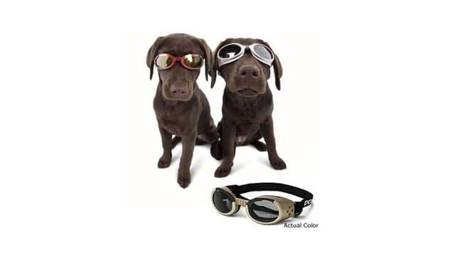 Schutzbrillen für Hunde: