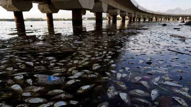 Eine Brücke über dem Wasser, im Wasser schwimmen tote Fische und Abfall